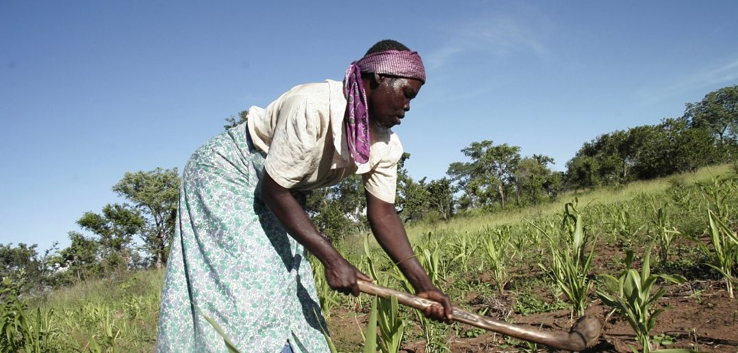 Why Urban Agriculture isn't a Panacea for Africa's Food Crisis